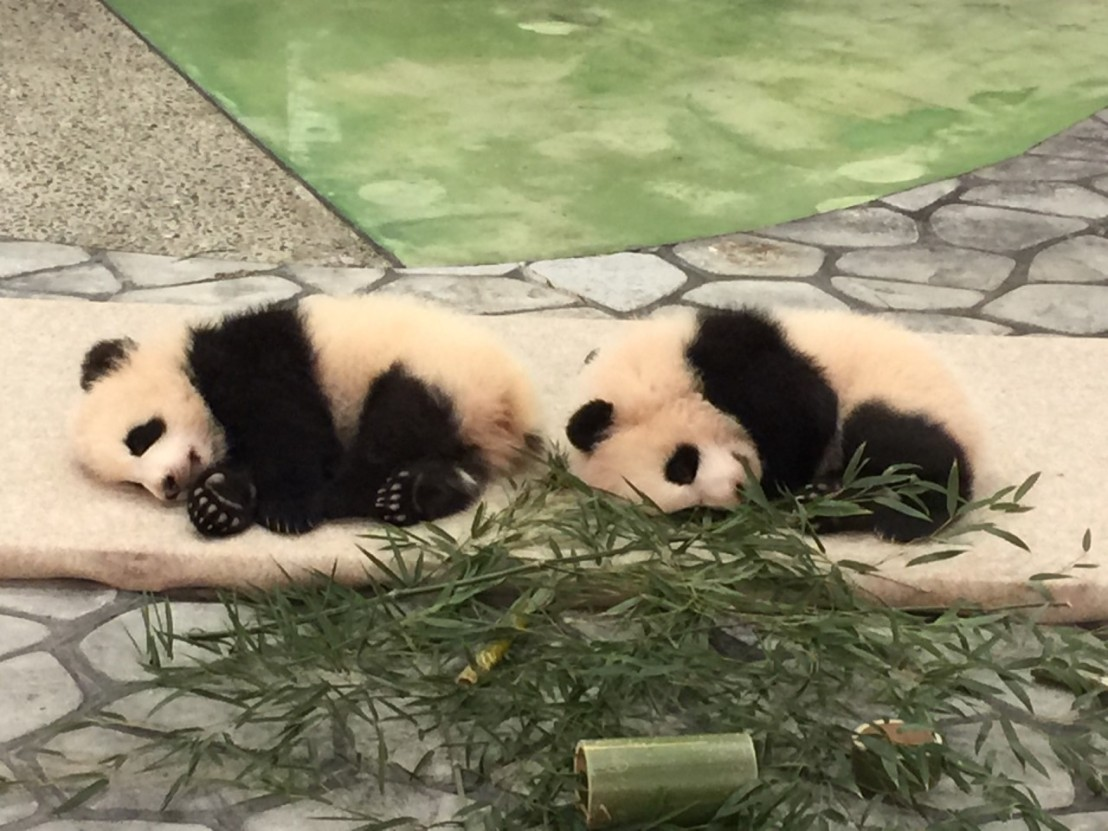南紀白浜のパンダ